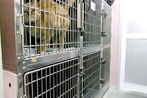 猫専用入院室